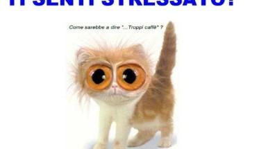 stress_gattino